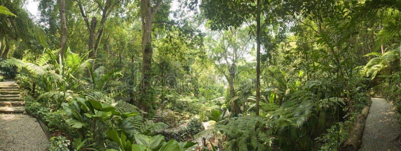 Tropical Garden, Malaysia. Tropical rain forest garden in Malaysia stock photos