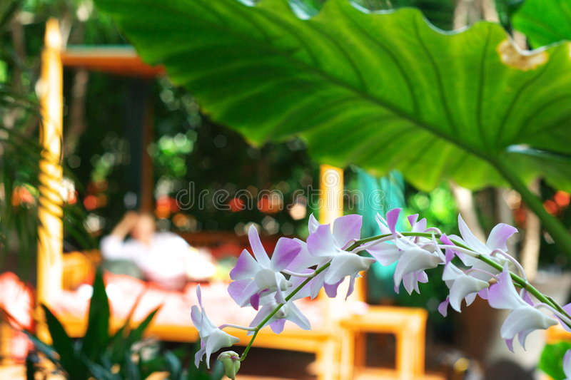Tropical garden with orchids stock images