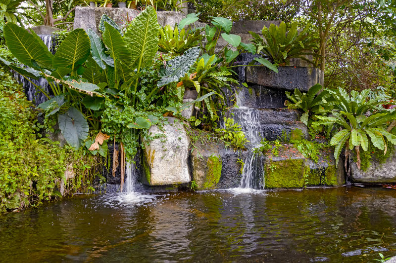 Tropical garden pond and plants stock image image of for Garden pond unlimited