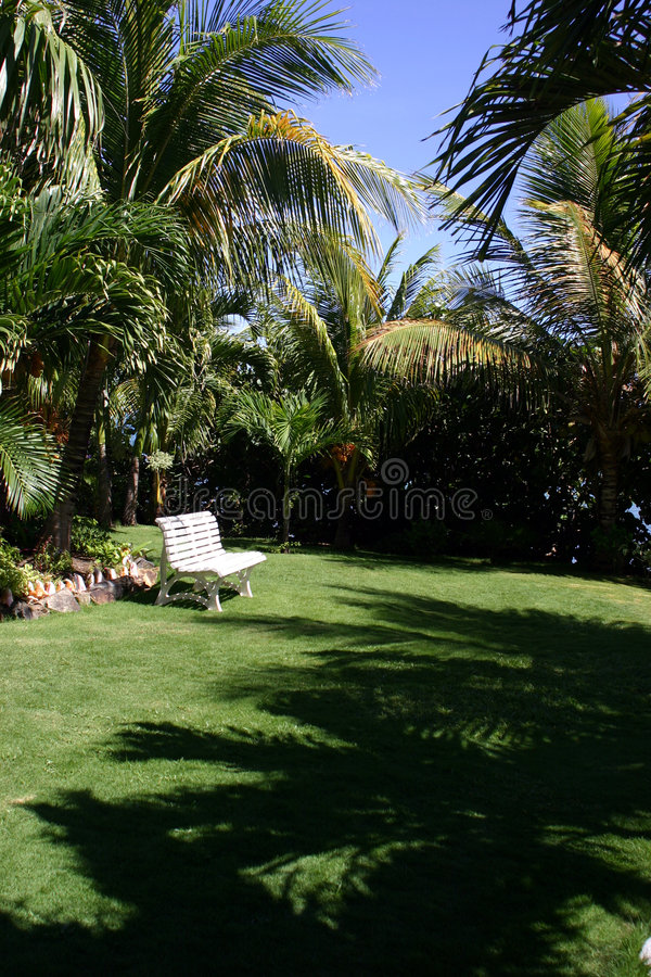 Tropical garden in summer. Palm trees casting shadow over tropical garden in summer scene royalty free stock photos