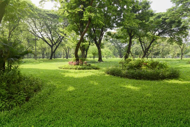 Tropical garden in sunlight. stock image