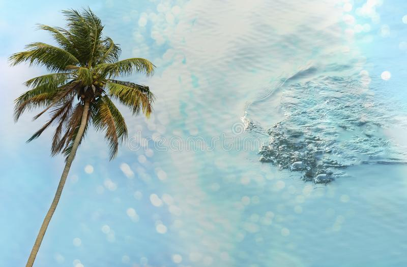 Tropical green coconut with wave light blue sea water summer travel vacation nature background royalty free stock image