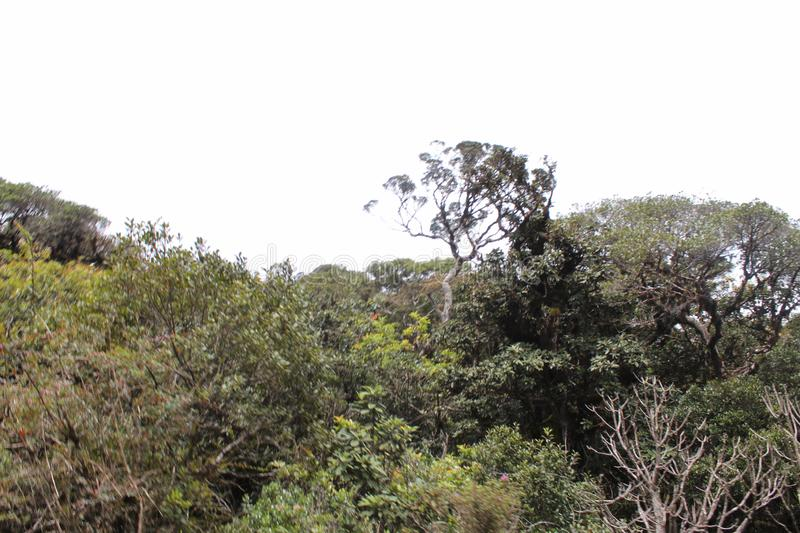 Tropical green colour tree tops. It`s a forest mountain surrounded by various small trees royalty free stock photos