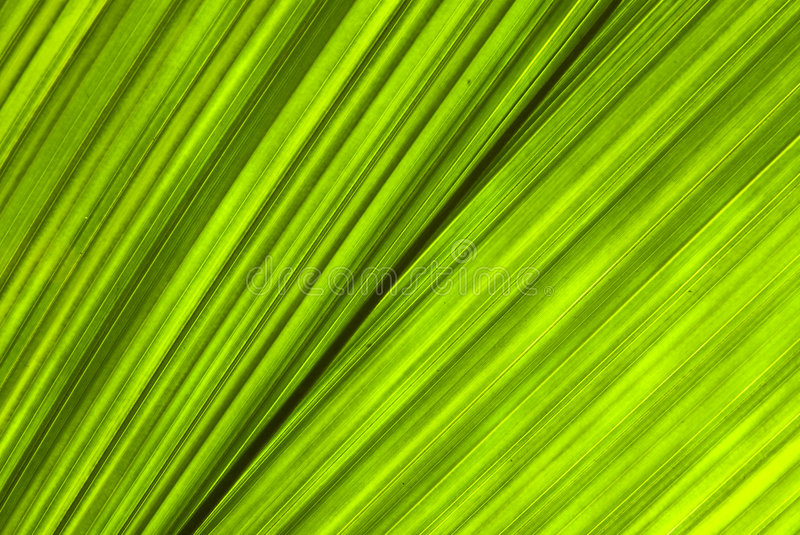 Download Tropical Green Leaf - Abstract Background Stock Image - Image: 7557741