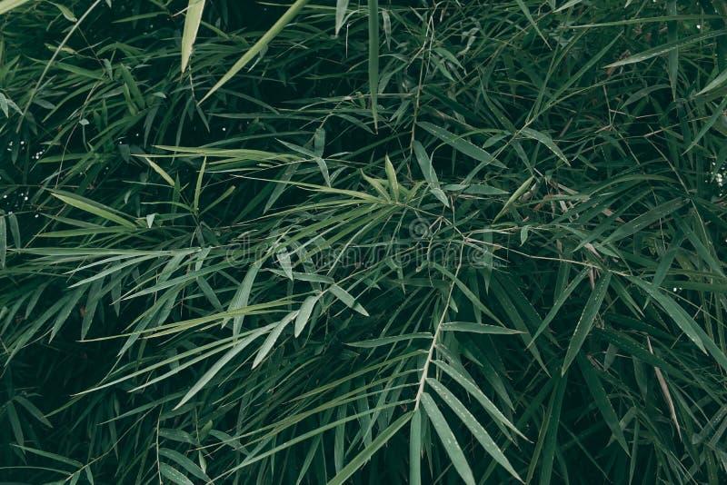 Tropical green leaf background, Dark tone theme.  stock image