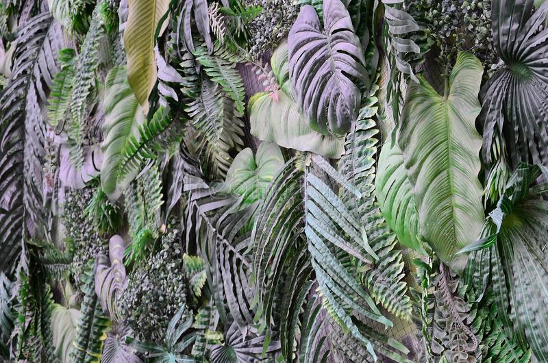 Tropical green leaves background, fern, palm and Monstera Deliciosa leaf on wall stock image