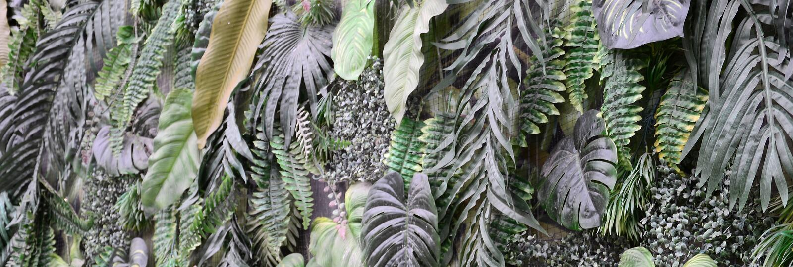 Tropical green leaves background, fern, palm and Monstera Deliciosa leaf on wall royalty free stock photos