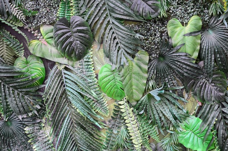 Tropical green leaves background, fern, palm and Monstera Deliciosa leaf on wall royalty free stock photo