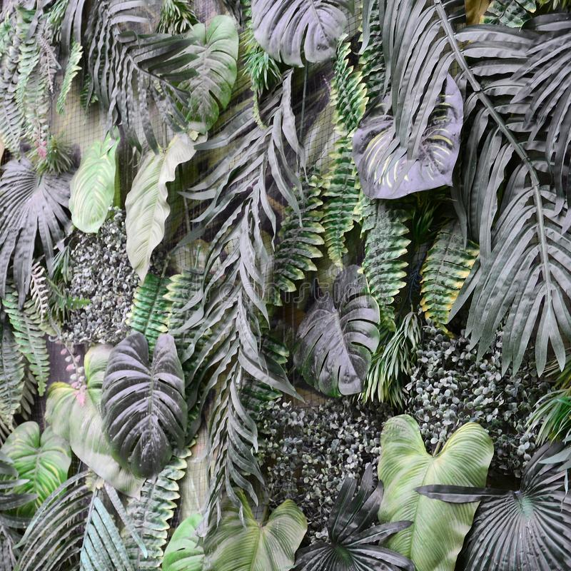 Tropical green leaves background, fern, palm and Monstera Deliciosa leaf on wall stock photo