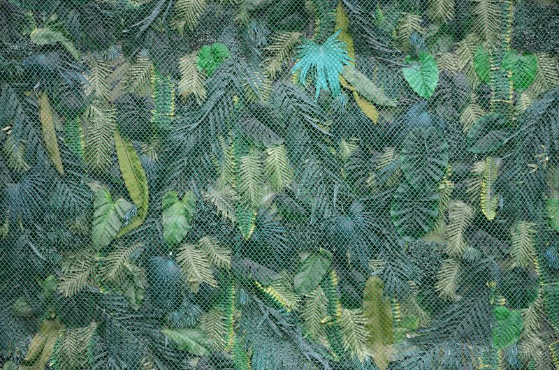 Tropical green leaves background, fern, palm and Monstera Deliciosa leaf on wall stock images