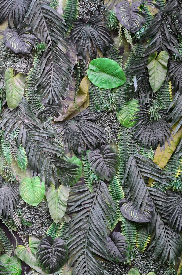 Tropical green leaves background, fern, palm and Monstera Deliciosa leaf on wall royalty free stock image