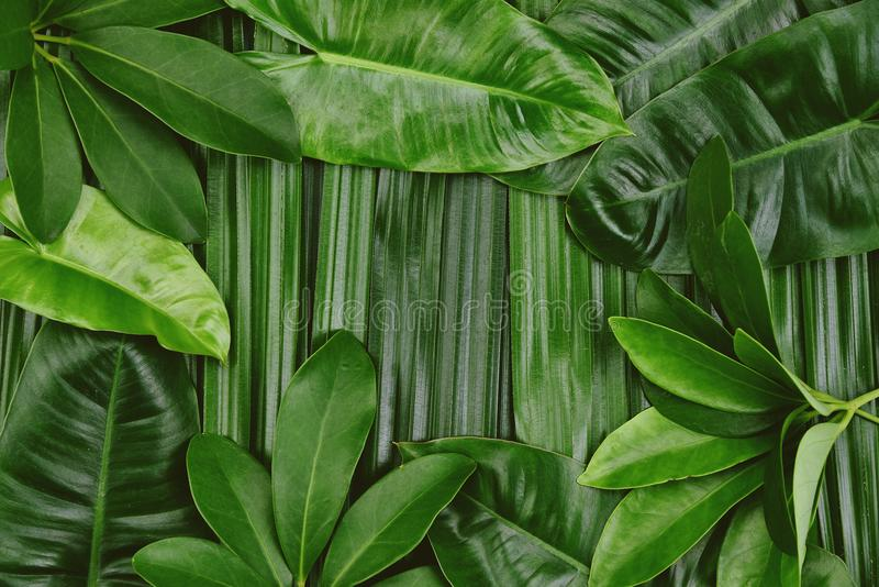 Tropical green leaves background, Natural pattern concept. Tropical green leaves background, Natural pattern concept, Top view royalty free stock photos