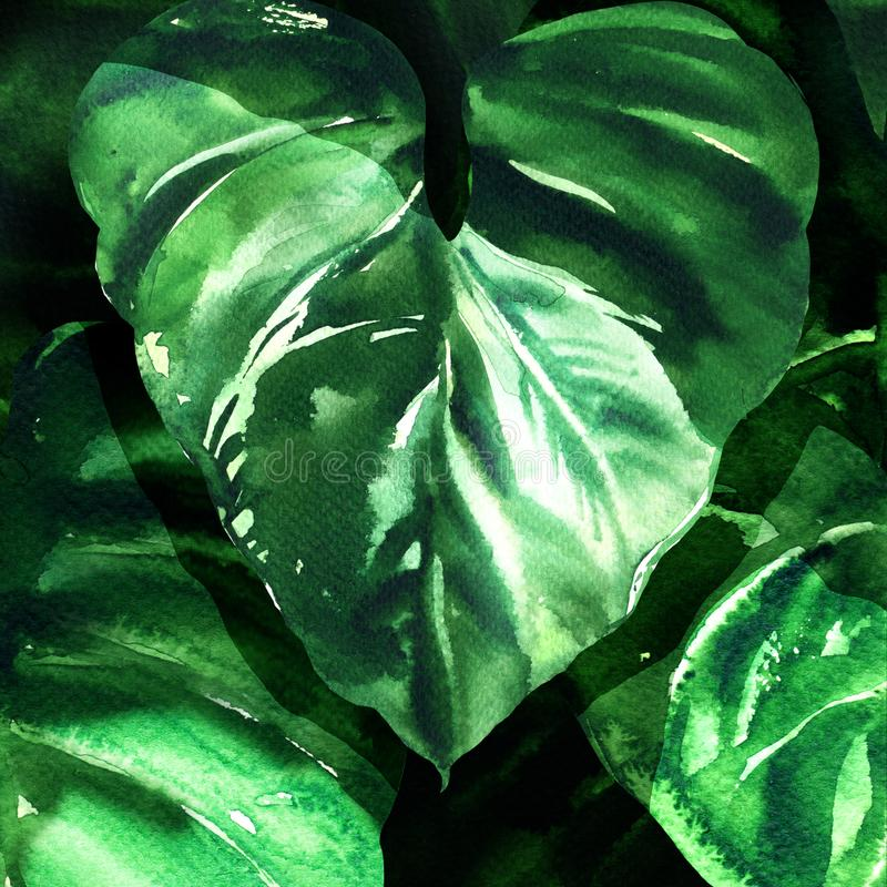 Tropical green leaves background. Nature concept, large dark leaf, green foliage, watercolor illustration stock photos
