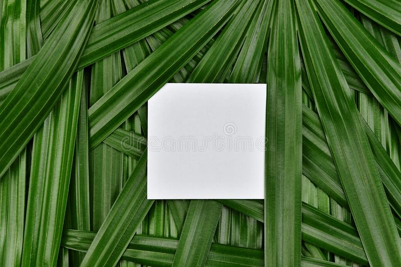 Tropical green leaves background with paper frame copy space in the center, Natural pattern concept. royalty free stock images