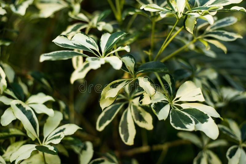Tropical green leaves on dark background, nature summer forest plant concept stock images