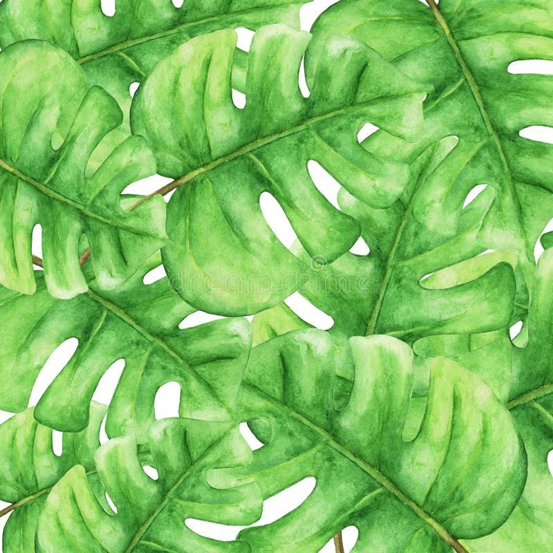 Tropical Green monstera leaves, Tropical plant. floral pattern background. Hand painted watercolor illustration .Plant nature wallpaper vector illustration