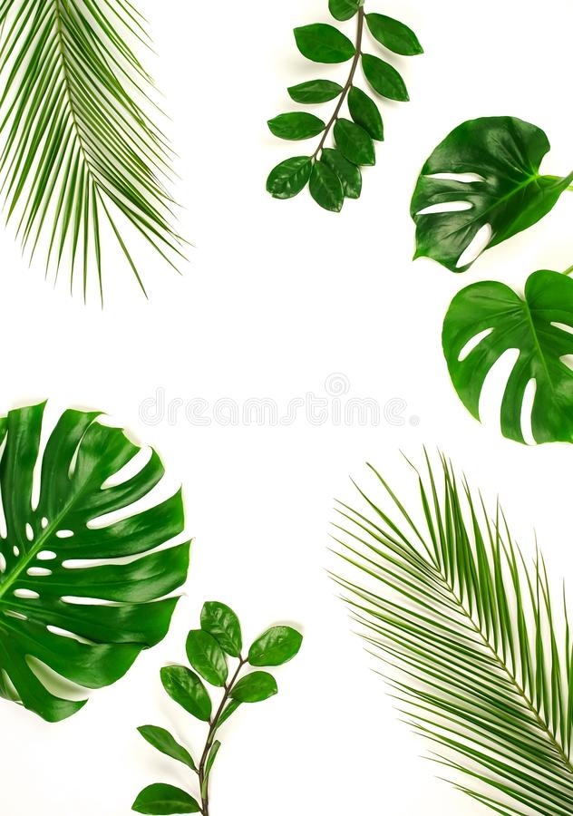 Free Tropical Green Palm Leaves, Branches Pattern Frame On A White Background. Royalty Free Stock Photos - 149348258
