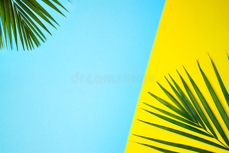 Tropical green palm leaves on colorful background. Yellow and blue colors. stock images