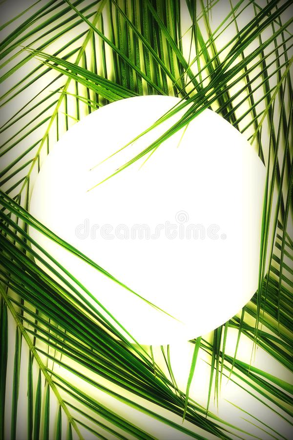 Tropical green palm leaves pattern with paper card note mock up. Plant abstract background. flat lay, top view.copy space royalty free stock photos