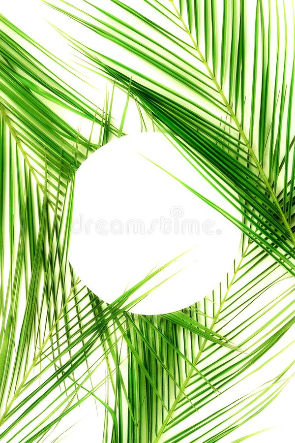 Tropical green palm leaves pattern with paper card note mock up. Plant abstract background. flat lay, top view.copy space royalty free stock image