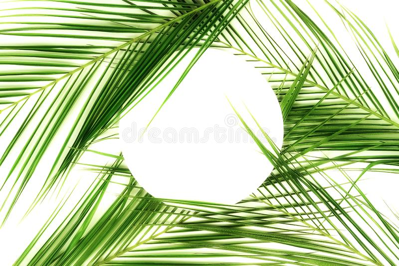 Tropical green palm leaves pattern with paper card note mock up. Plant abstract background. flat lay, top view.copy space stock photo