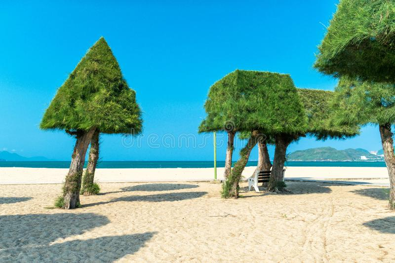 Tropical green trees on beach near sea in sunlight. In Nha Trang royalty free stock image