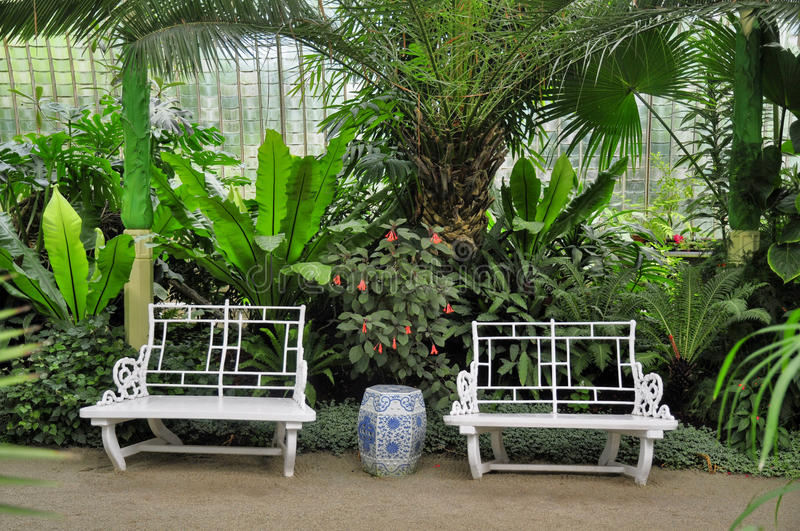 Tropical greenhouse stock images
