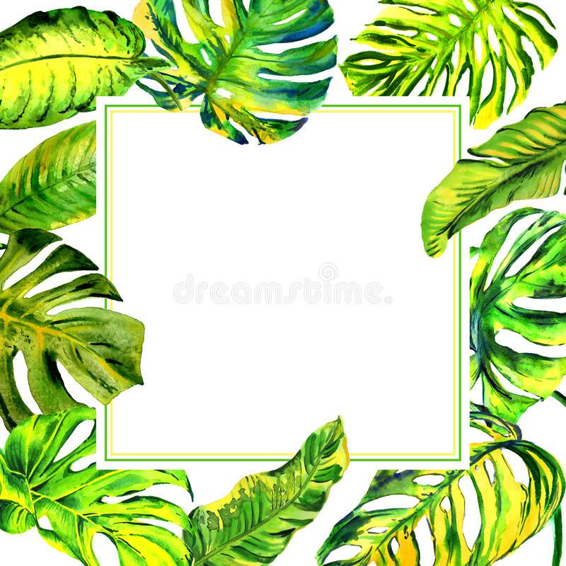 Tropical Hawaii leaves palm tree frame in a watercolor style isolated. vector illustration