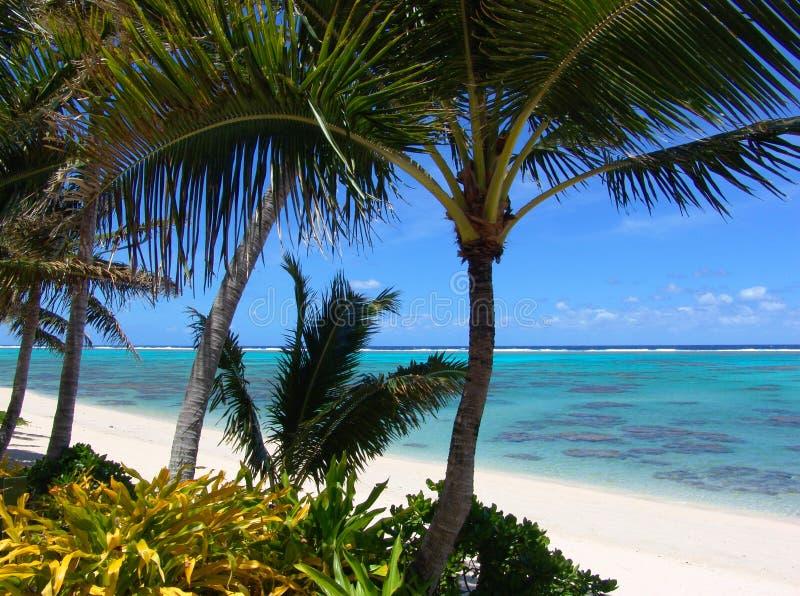 Tropical Heaven stock photos