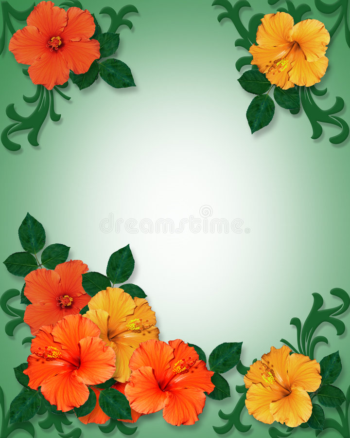 Tropical Hibiscus Flowers background royalty free illustration