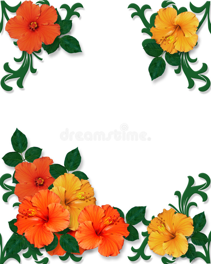 Tropical Hibiscus Flowers background vector illustration