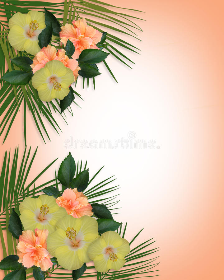 Tropical Hibiscus Flowers Border Stock Illustration