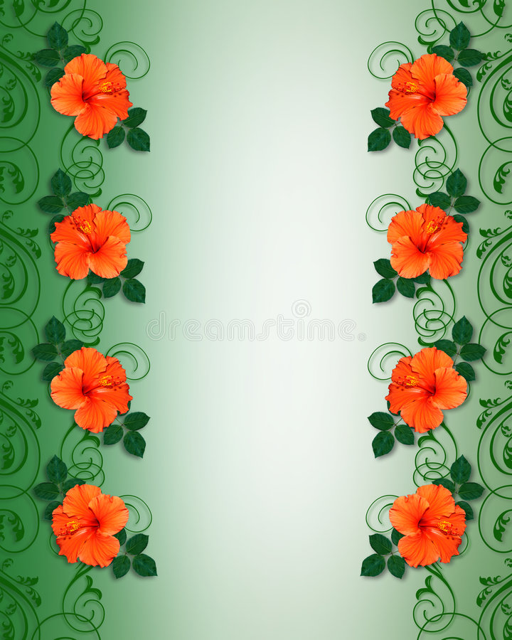 Tropical Hibiscus Flowers Border stock illustration