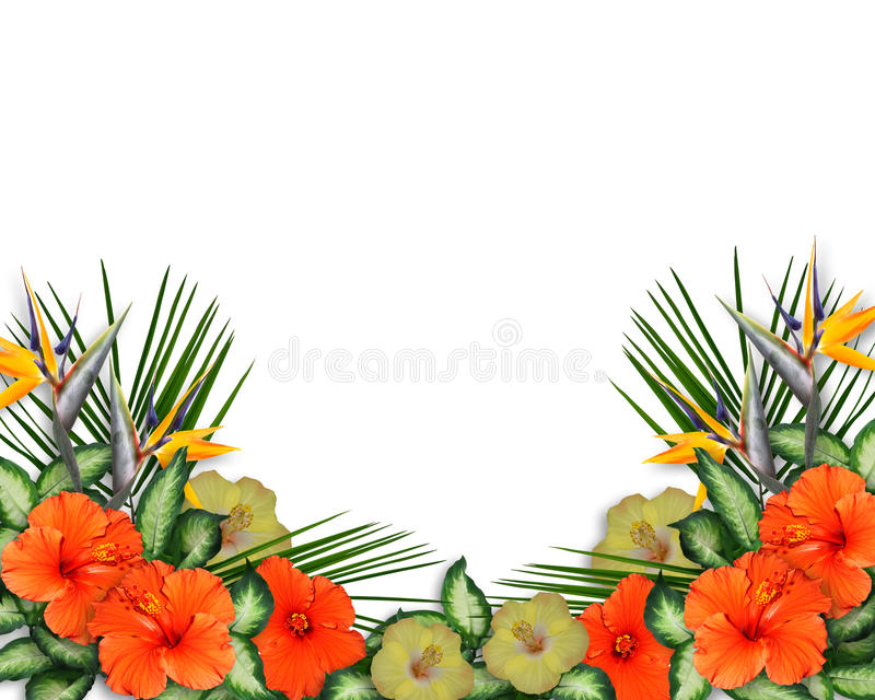 Tropical Hibiscus Flowers border vector illustration