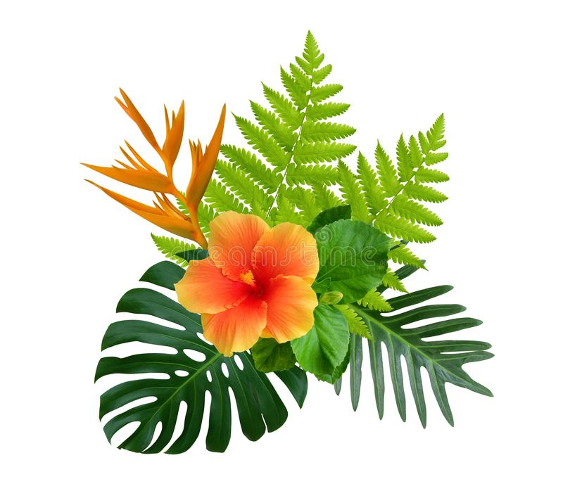 Tropical hibiscus and Strelitzia reginae flowers on green monstera and fern leaves plant bush isolated on white stock image