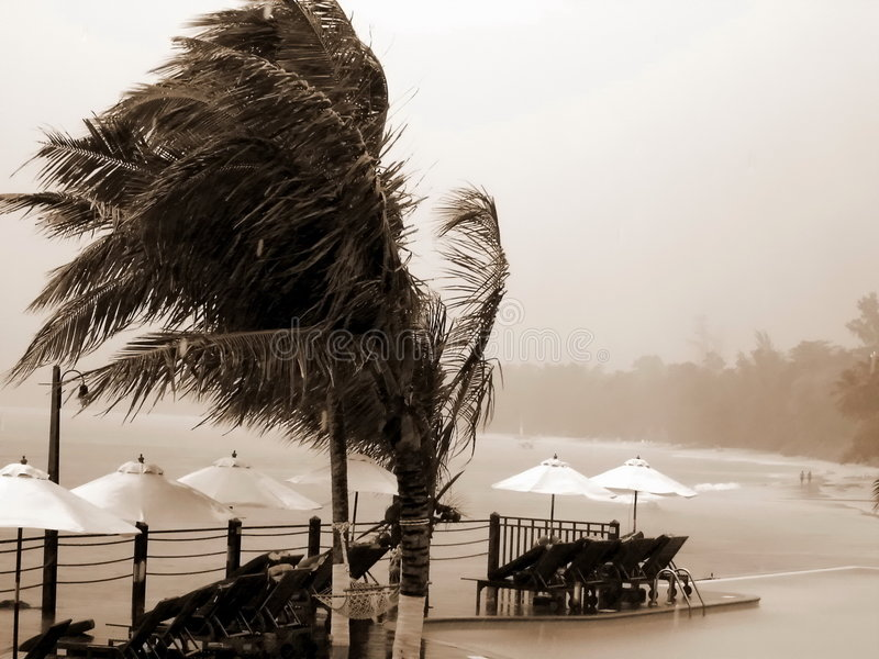 Tropical Hurricane, Resort, Palms. Royalty Free Stock Photos