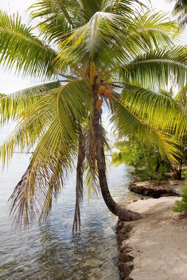 Download Tropical island stock photo. Image of island, horizon - 17842254