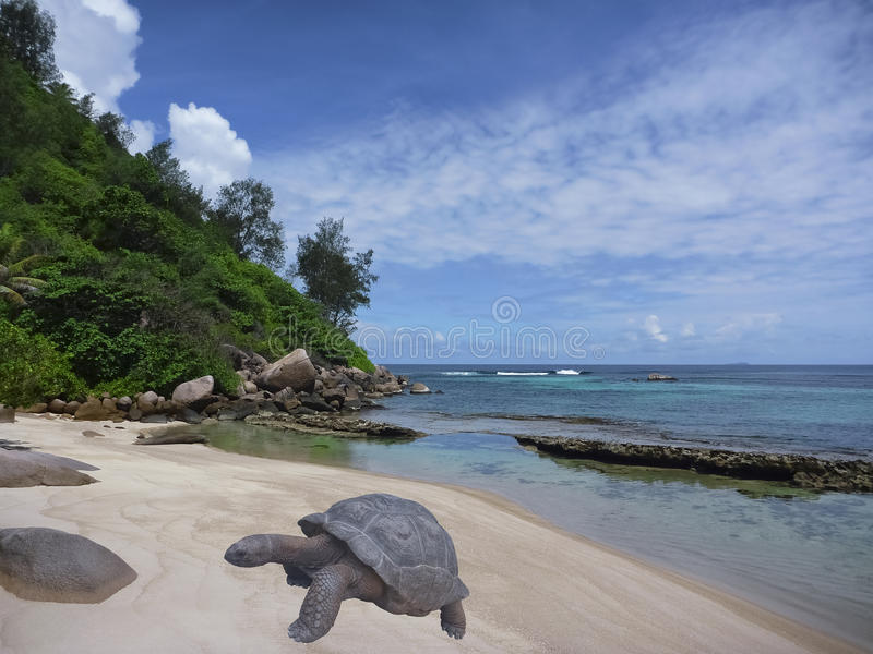 Tropical island beach and giant turtle, Seychelles. Tropical beach and gigantic turtle. Sea bay scenery. Aldabra giant tortoise. Scenic landscape with sandy royalty free stock photography