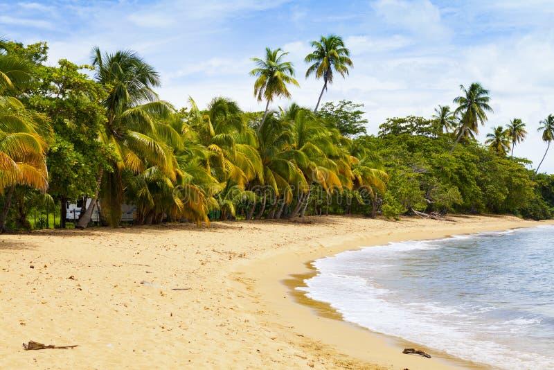 Download Tropical island stock photo. Image of rico, private, dream - 33513834