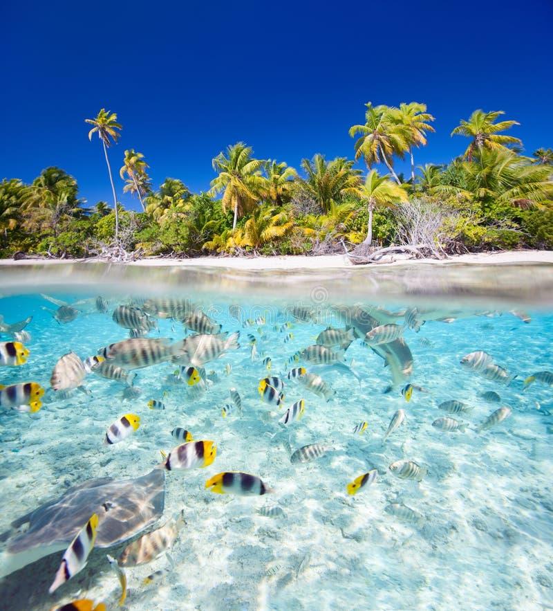 Tropical Island: Tropical Island Stock Photo. Image Of Beautiful, Shore