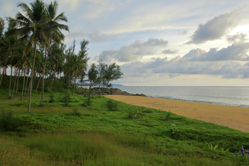 Tropical island of coconut trees and grassland stock image
