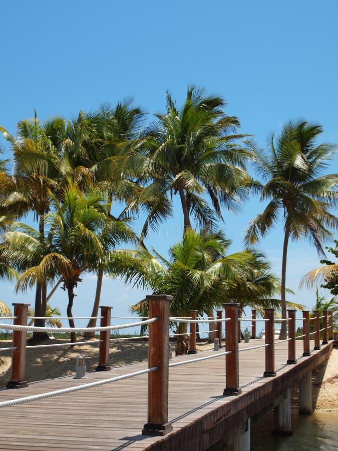 Download Tropical Island Footbridge stock photo. Image of coastal - 24511022