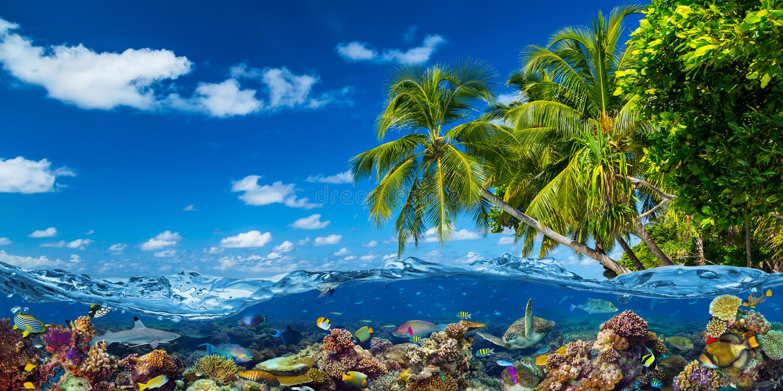 Tropical island paradise beach with underwater water wve surface with colorful coral reef sea ocean life. shark fish  sea turle. royalty free stock photo