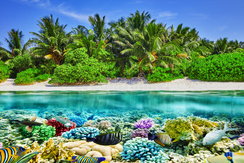 Tropical island and the underwater world in the Maldives. stock images
