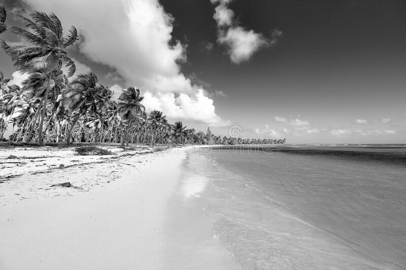 Tropical island. View of the beach.  royalty free stock image