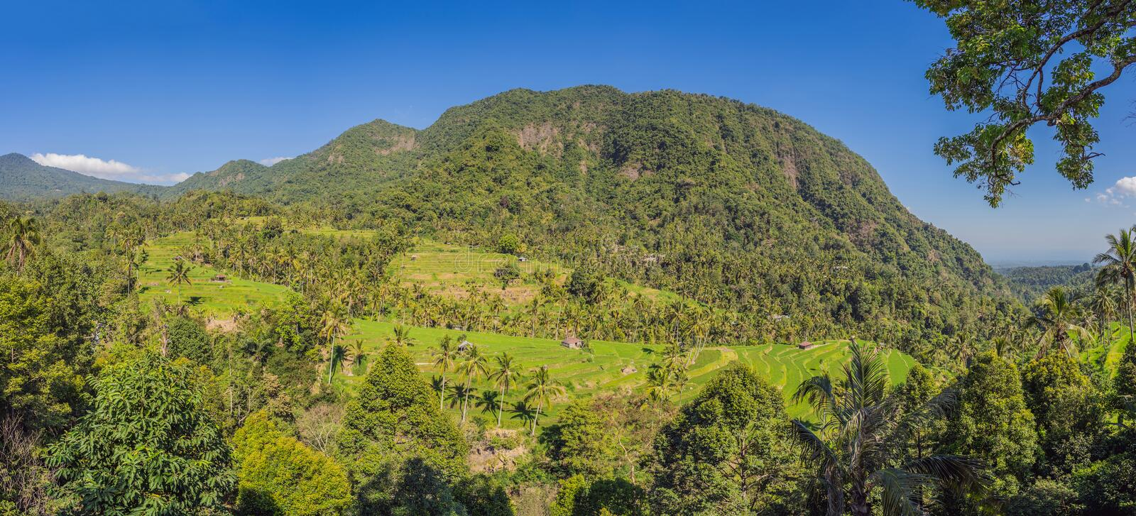 Tropical jungle of bali. Forest and mountain stock photo