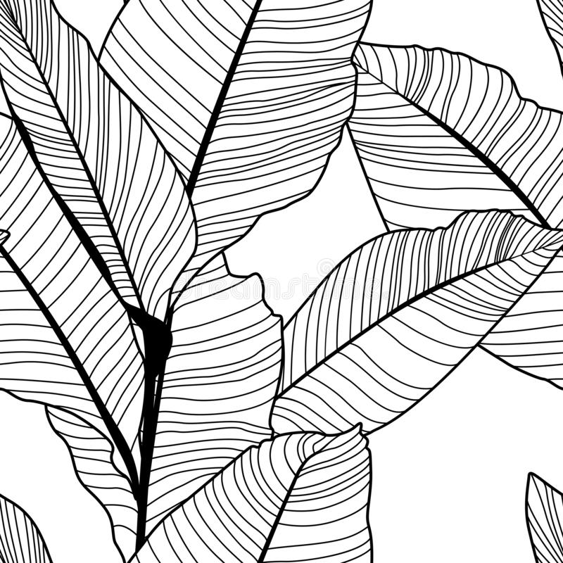 Tropical jungle banana leaf pattern, black and white royalty free illustration