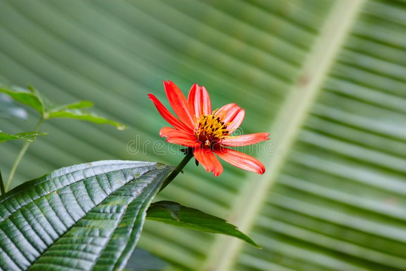 Tropical Jungle Flower. Red colour inbetween the green jungle stock image