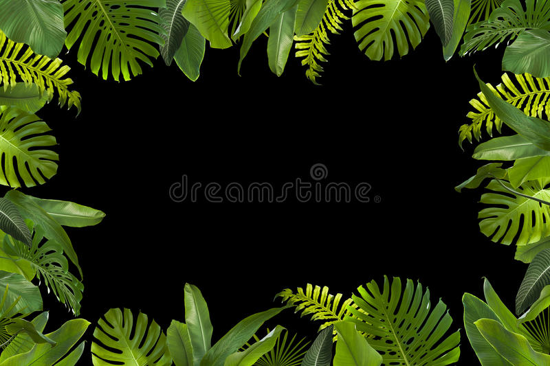 Tropical Jungle Leaves Background Stock Photo Image Of