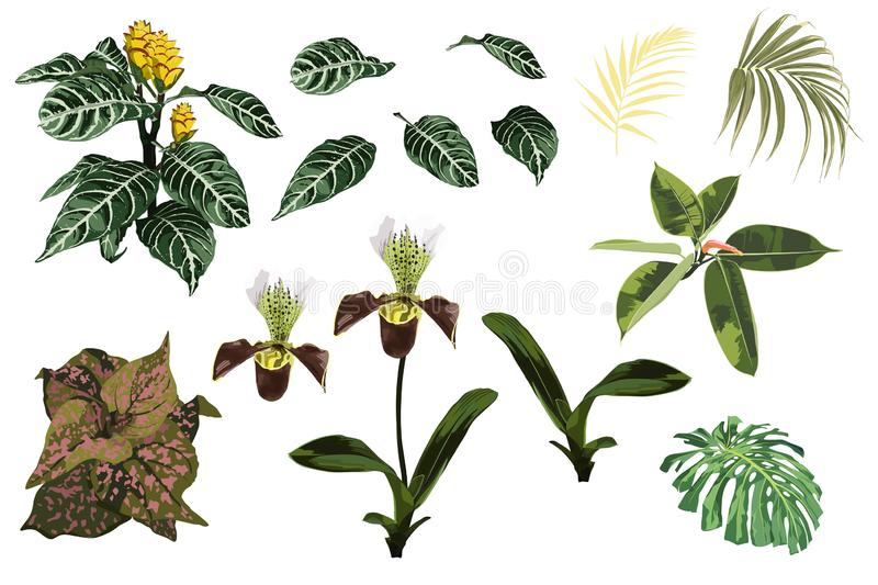 Tropical jungle orchid flowers, exotic yellow plant, tropical palm leaves and plant set. vector illustration